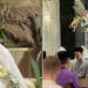 Tahniah Buat Pasangan Zahirah MacWilson & Aiman Hakim